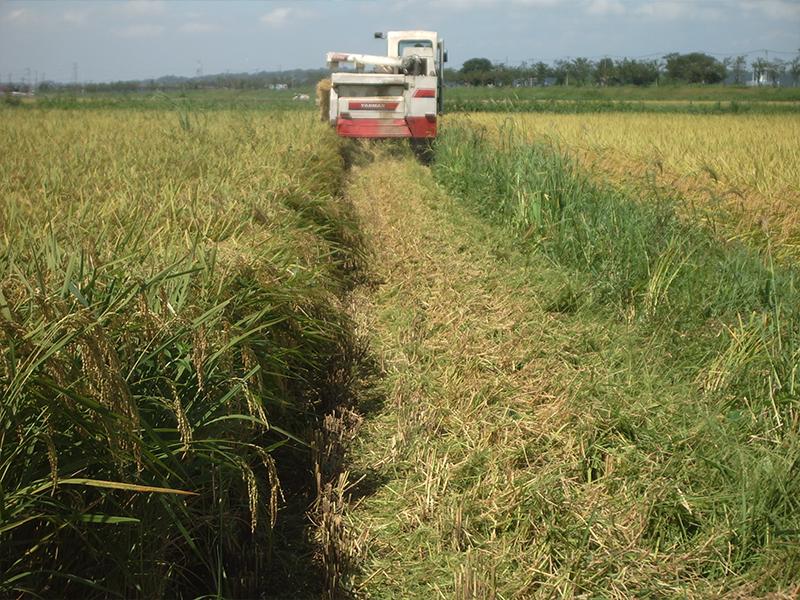 コンバインによる稲刈り